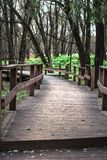 Wooden bridge in the forest. Wooden bridge in the autumn forest among the trees Stock Images