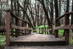 Wooden bridge in the forest. Wooden bridge in the autumn forest among the trees Stock Photography