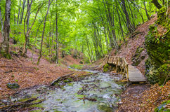 Wooden bridge in a forest Royalty Free Stock Images