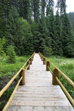 Wooden bridge in forest Royalty Free Stock Image