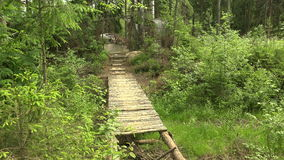 A wooden bridge in the forest. 4K. A wooden bridge in the forest. Shot in 4K (ultra-high definition (UHD)), so you can easily crop, rotate and zoom, without stock video footage