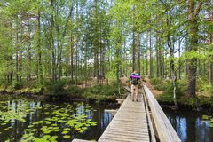 Wooden bridge in finland wih hiker stock photo