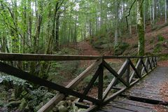 Wooden bridge in the forest near Vizzavona station, trekking route GR20, Corsica Stock Photography