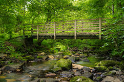 Wooden Bridge in a Forest Stock Photo