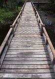 Wooden bridge in forest over the swamp Royalty Free Stock Image