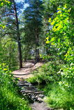 Wooden bridge through the forest River. In the pine forest, wooden bridge over a marshy Stock Photos