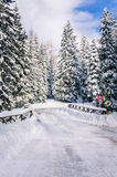 Wooden Bridge on a Forest Road Covered in Snow Stock Photography
