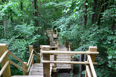 Wooden bridge in the forest. Sigulda. Stock Image
