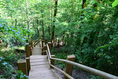 Wooden bridge in the forest. Sigulda. Royalty Free Stock Images
