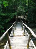 Wooden bridge in forest Stock Photo