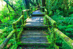 Wooden bridge in the forest Stock Photos