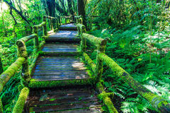 Wooden bridge in the forest Royalty Free Stock Image