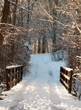 Wooden Bridge at Forest Royalty Free Stock Photos