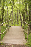 Wooden bridge in a forest. Wooden walkway in green  forest near the Ropotamo river, Bulgaria Royalty Free Stock Images