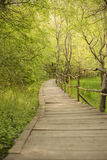 Wooden bridge in a forest. Wooden walkway in green  forest near the Ropotamo river, Bulgaria Royalty Free Stock Photography