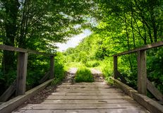 Wooden bridge in green forest. Lovely nature scenery in springtime Royalty Free Stock Photos