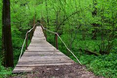 Wooden bridge among green trees in spring Park. Among the trees with green leaves spanned a wooden bridge royalty free stock images