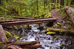 Wooden Bridge on hiking trail in Mountain. Wooden foot bridge on hiking trail over flowing river with mossy rocks. Trail on top of Mt. Rainier in Washington royalty free stock photography