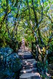 Wooden Bridge on the hiking trail to God`s Window near Graskop in the province of Mpumalanga Stock Image