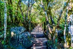 Wooden Bridge on the hiking trail to God`s Window near Graskop in the province of Mpumalanga Stock Photo