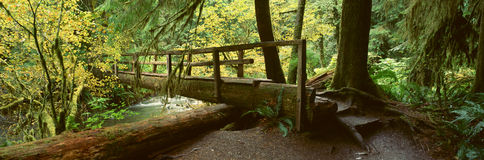 Wooden Bridge In The Hoh Rainforest Stock Images