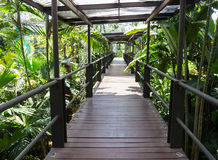 The wooden bridge in the indoor park Royalty Free Stock Photography