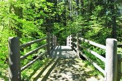 Wooden bridge. Inside silver falls area oregon state america Stock Images