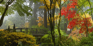 Wooden Bridge at Japanese Garden in Autumn