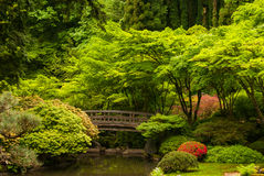 Wooden bridge in a Japanese garden Stock Image