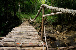 Wooden bridge in jungle Royalty Free Stock Images