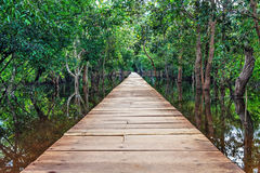 Wooden bridge in the jungle. Stock Photography