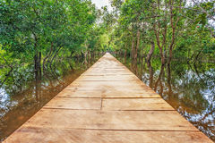 Wooden bridge in the jungle. Royalty Free Stock Photos