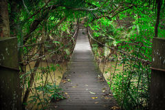 Wooden bridge in  jungle Stock Photos