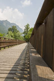 Wooden bridge on the lake. The wooden bridge on the lake Royalty Free Stock Images