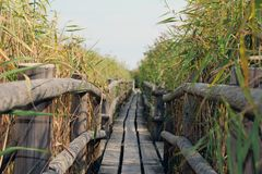 Old wooden bridge royalty free stock photo