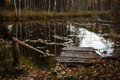 Wooden bridge on the lake. Twilight, leaves floating in the water, autumn, bridge of logs, platform for fishermen stock image