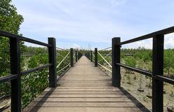 Wooden bridge lead to mangrove forest Stock Images