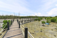 Wooden bridge lead to mangrove forest Royalty Free Stock Photography