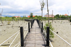 Wooden bridge lead to mangrove forest Stock Image