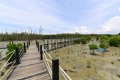 Wooden bridge lead to mangrove forest Stock Photos