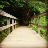Wooden bridge leading into the forest. royalty free stock image