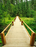 Wooden bridge leading into the green forest Stock Images