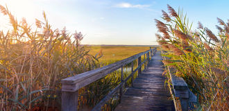 Wooden bridge leading into the swamp stock image