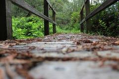 Wooden bridge. Leading into the woods Stock Image