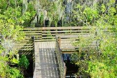 Wooden bridge in Lettuce lake Stock Images