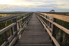 Wooden Bridge in lotus lake Royalty Free Stock Image