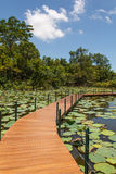 Wooden Bridge in lotus pond. Thailand Royalty Free Stock Images