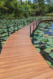 Wooden Bridge in lotus pond Royalty Free Stock Images