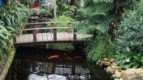 Wooden bridge. A lovely bridge over a pond with Koi Stock Image