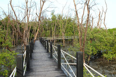 Wooden bridge in mangrove forest Stock Photos